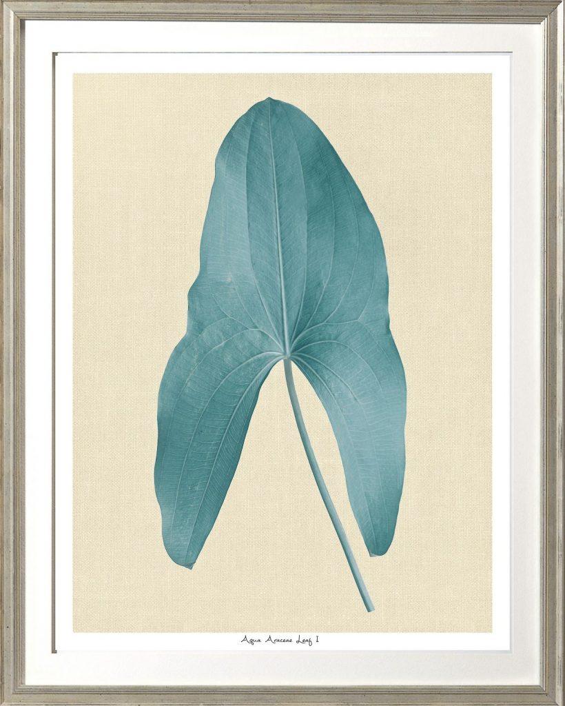 Aqua Araceae